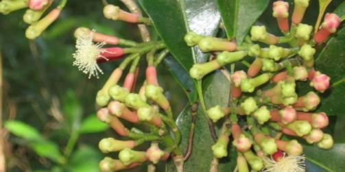 alimentos ricos em tiamina acido folico e vitamina b12 que causa el acido urico alto acido urico 5.80
