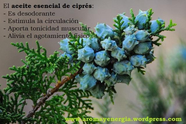 cipres 4