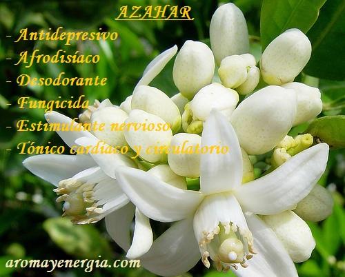 AZAHAR 2