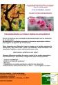 PSICOAROMATERAPIA 12 DE NOVIEMBRE