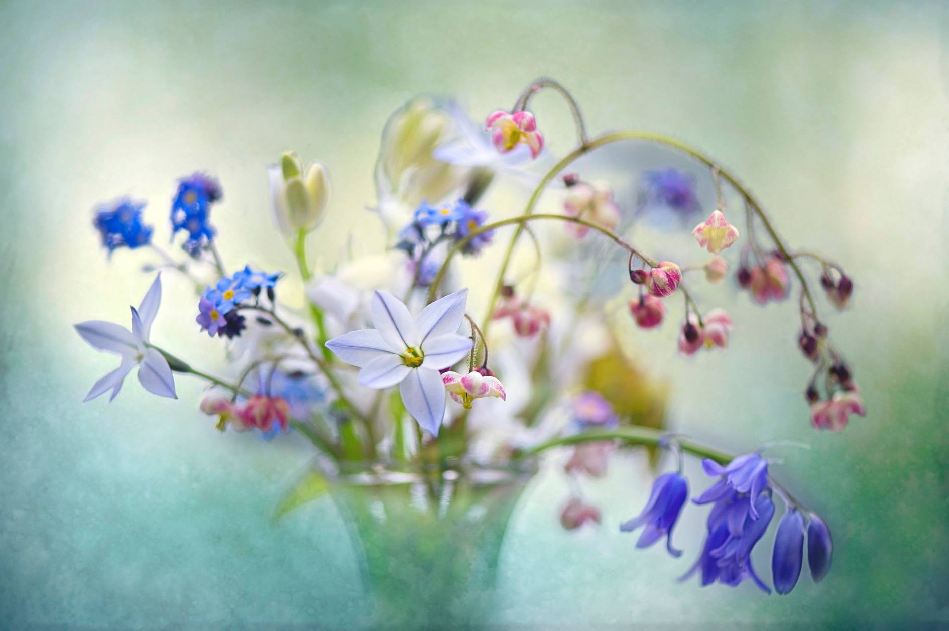 ¿Hay algún aroma que te traiga a la memoria un momento especial?