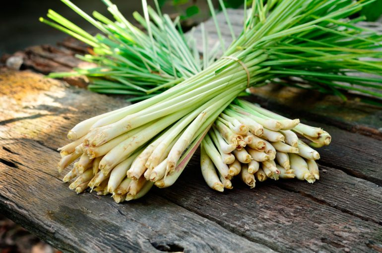lemongrass-bunch-770x510