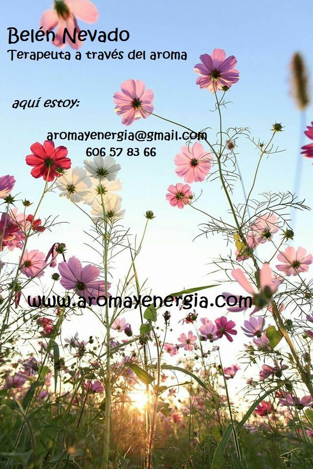 flores - copia - copia