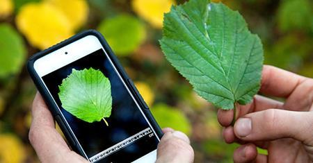 Aplicaciones móviles que te dicen todo sobre una planta con sólo una foto