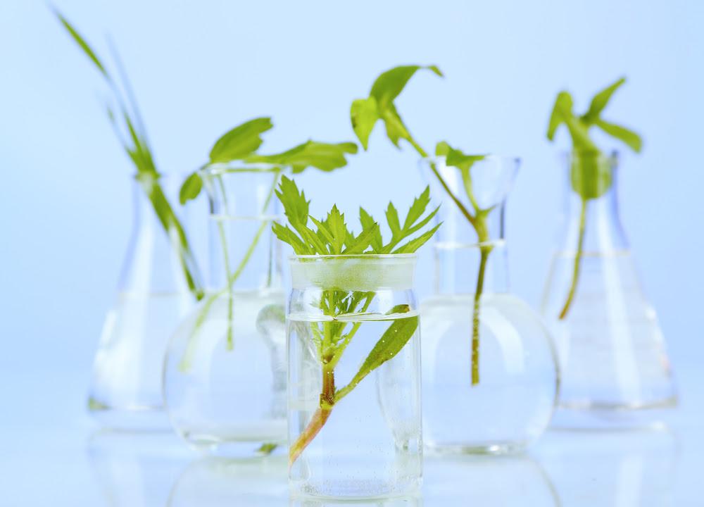 La relación que tiene el hombre con las plantas